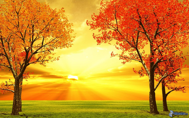 Farebn 233 Jesenn 233 Stromy Most Beautiful Background Color Image