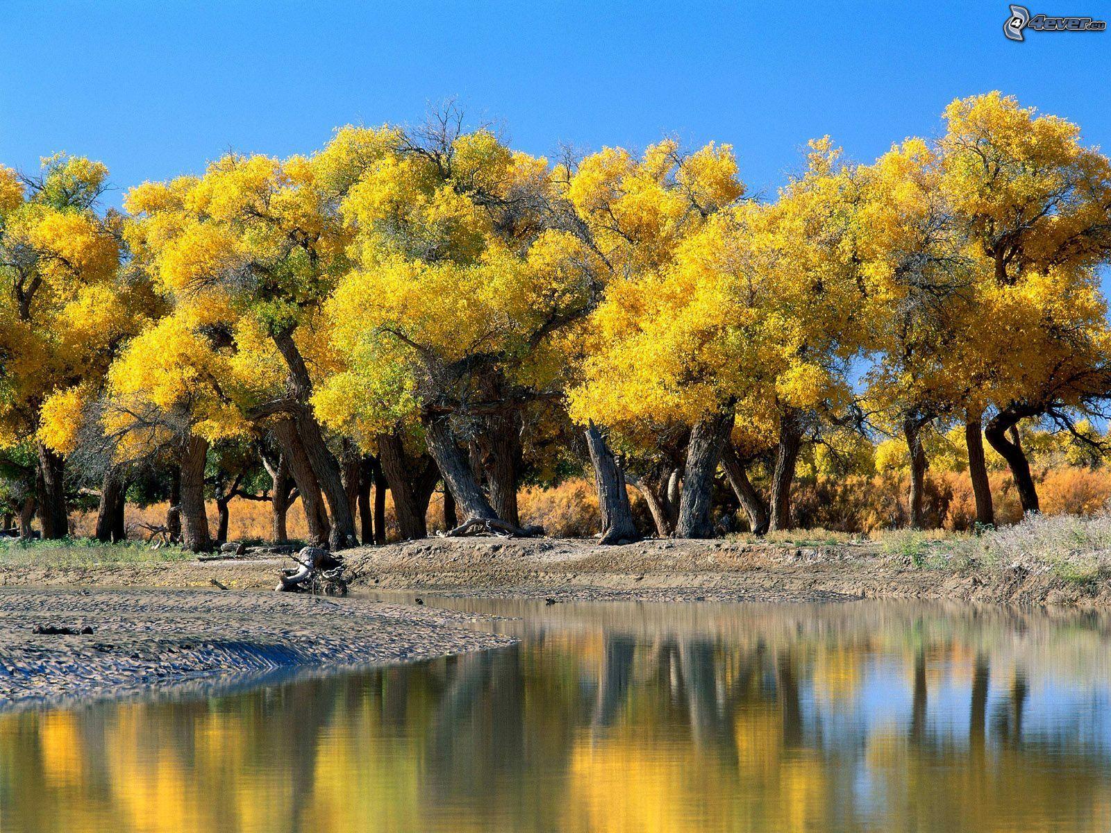 Jesenné stromy pri rieke