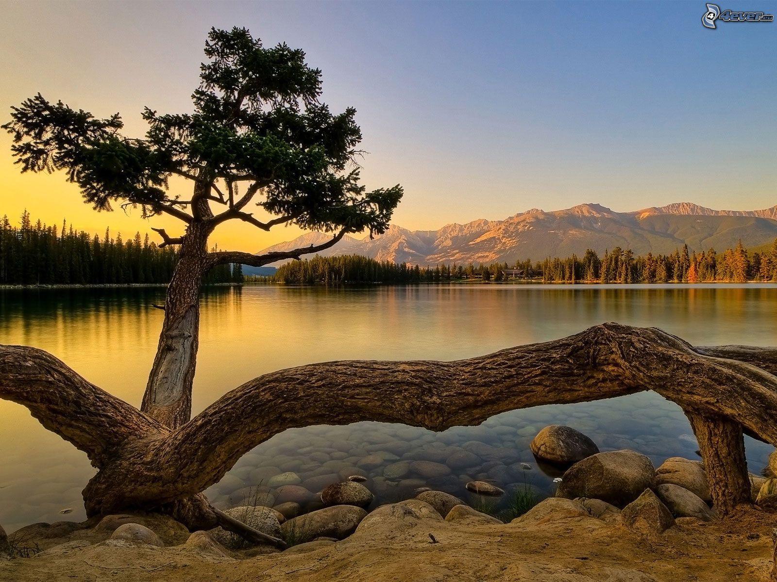 Zalazak sunca  - Page 5 Strom-nad-jazerom,-ihlicnan,-zapad-slnka,-hory,-pokojna-vodna-hladina,-les-149363