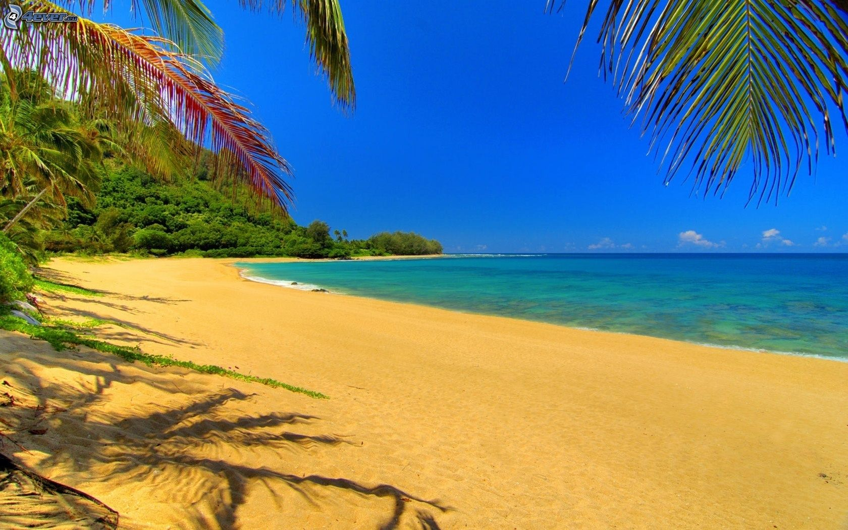 Plaža - Page 4 Plaz,-pobrezie,-tropicke-more,-palmy-159001