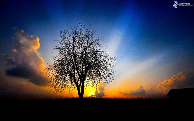 Zalazak sunca  - Page 5 Osamely-strom,-zapad-slnka-za-lukou,-slnecne-luce,-silueta-stromu-153781