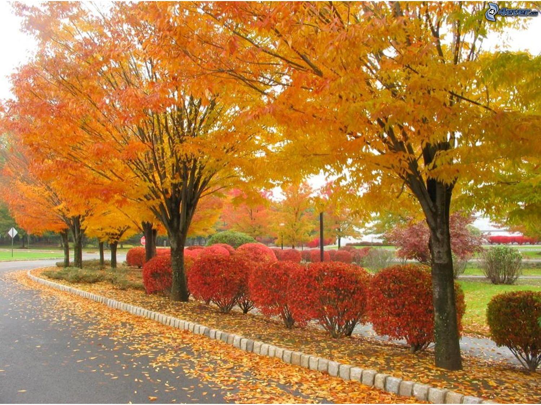 http://obrazky.4ever.sk/data/download/priroda/rastliny/jesenny-park,-stromova-alej,-mesto,-cesta,-zlte-listie-150151.jpg