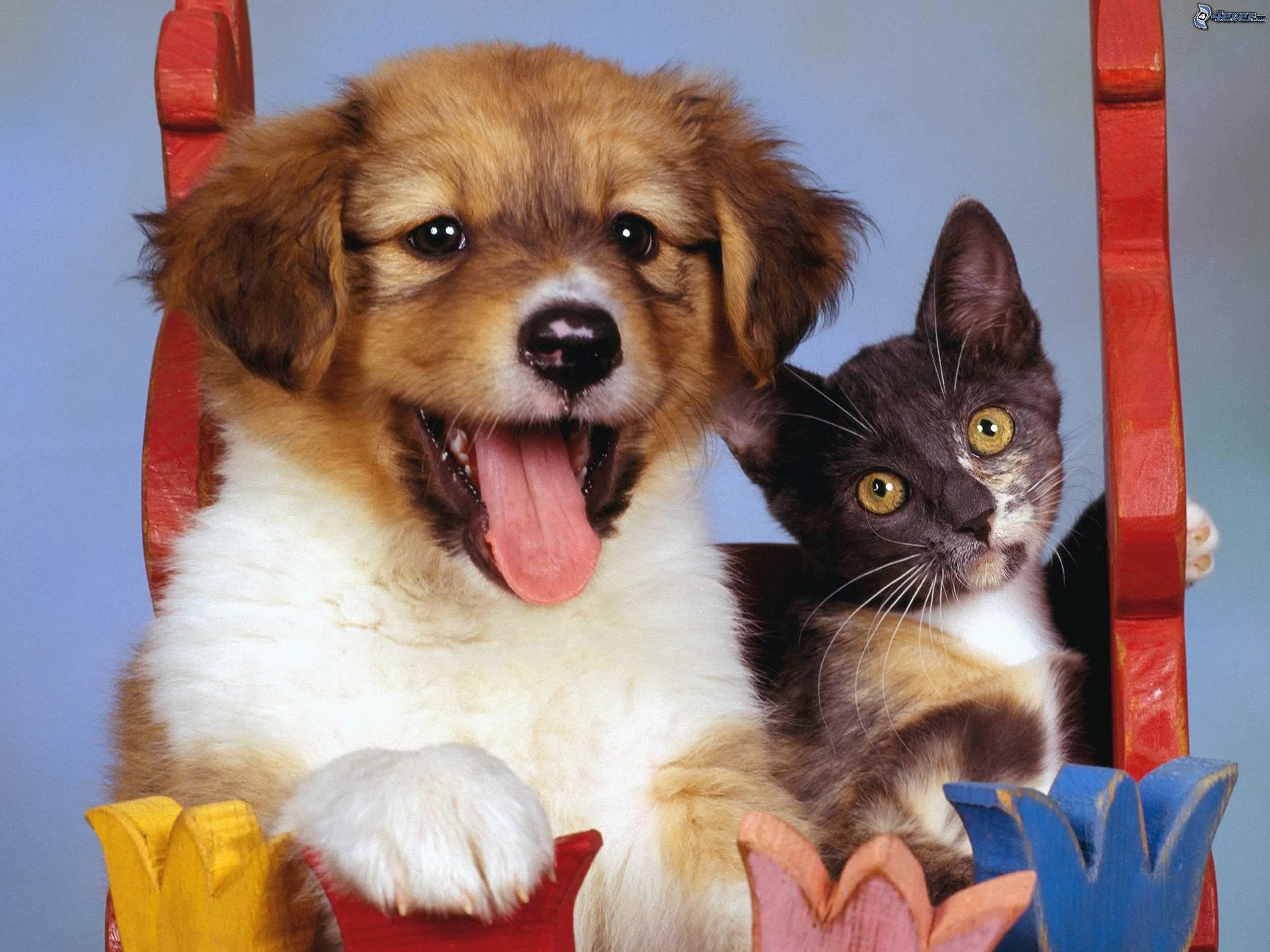 Животные фото кошки собаки 8